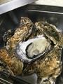 料理メニュー写真磯笛の冬の名物『牡蠣のカンカン焼き』