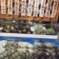 夜光貝や伊勢海老が入荷することも♪新鮮な貝類もたくさん!
