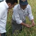 なんと・・・神戸牛から作られるお米!