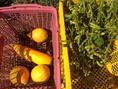 季節によって旬の美野菜も変わります!
