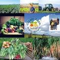 """【契約農家 北海道 洞爺 佐々木ファーム】佐々木ファームの産直野菜は """"ありがとう農法""""で育てられるエネルギー溢れる野菜。ありがとう農法とは、地球に寄り添う農法で肥料農薬を使用せず野菜を栽培し、喜びの循環を起こすことを目的として、命にあふれた野菜たちを栽培しています。北の大地が生んだ瑞々しい野菜を!"""