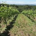 【アズッカ エ アズッコ のワイン ~愛知県 豊田市 勘八~】地元愛知県豊田市で作られるアズッカエアズッコワイナリー。地元でこんなおいしいワインがと思うほどこだわりを持ってつくられる国産ワインは今や人気沸騰中で入手困難。少しだけですがご用意しています。