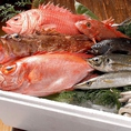 毎日直送される明石昼網鮮魚