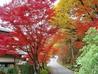 山神温泉 湯乃元館のおすすめポイント1