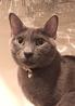 Bistro le chat noir ビストロ ル シャノワールのおすすめポイント1