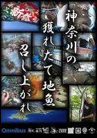 とくに神奈川県産にこだわり!魚は鮮度!地魚だから旨い