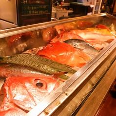 カウンター前に並ぶ鮮魚は圧巻!おすすめの品をお刺身やマース煮でどうぞ!