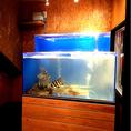オーダーが入ると店内水槽からお魚を取り出し、新鮮な状態で御提供致します。。