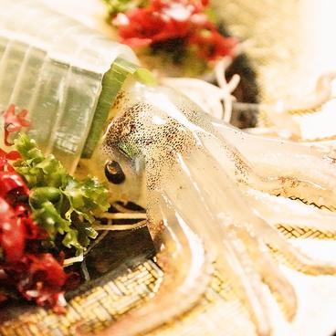 函館魚まさ 札幌すすきの店のおすすめ料理1