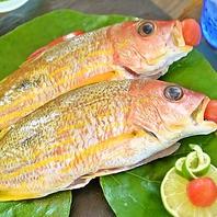 県産の獲れたてお魚を新鮮なうちに調理!