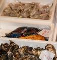 岡山中央卸売市場より新鮮な地魚