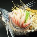 料理メニュー写真相模湾直 トビウオの刺身