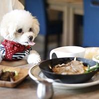 ペット同伴OK♪アットホームな雰囲気の肉バル♪