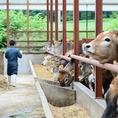 キタバルおすすめ【トムラウシ・ジャージー牛】関谷牧場さんより直送です