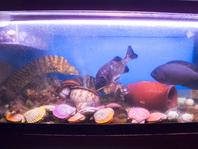 水槽で泳ぐ新鮮な魚をご提供!