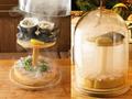料理メニュー写真朝獲れ三浦鮮魚と貝のワラ薫るスモークカルパッチョ