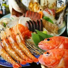 ルンゴカーニバル 原始焼き酒場 活魚と焼魚 南2条のコース写真