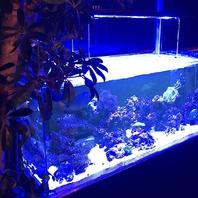 青い光がキレイなアクアリウムが雰囲気バツグン!