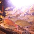新鮮な魚がいけすで毎日泳いでいますよ♪