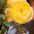 季節を感じる…四季折々のお花や観葉植物♪