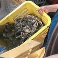 身が大きくて濃厚な味わいの釧路町仙鳳趾の牡蠣や活ほたてをはじめ、アサリ・カニ・ツブ・ホタテなど北海道産魚介類から、高級食材オマール海老まで旬の新鮮素材を取り揃えています。