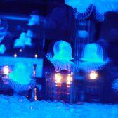 青く輝く水槽にはクラゲたち