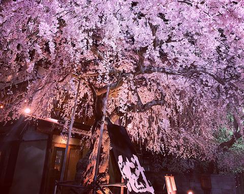 富士山麓にたたずむ築100年の古民家をリノベーションした居酒屋です。