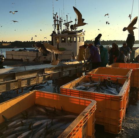 鮮度抜群!美味しい魚をリーズナブルに満喫できます!各種コースもご準備しています。