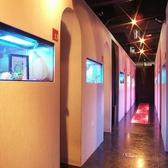 室内・廊下共に幻想的な空間です♪新橋駅周辺で楽しく飲み会をできる居酒屋をお探しでしたら是非、居酒屋新橋個室の宝石箱柚のしずく新橋店をご利用ください★