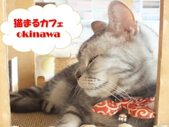 猫まるカフェ okinawaの写真