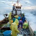 生鮮朝獲れ新鮮鮮魚を使用した料理【北海道紋別市新港町】紋別漁港で水揚げされた鮮魚は北海道から空輸で極めて短時間に料理長の手元に届くその食材こそ最も新鮮かつ美味しくご提供できると考えております。