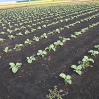 産地と鮮度にこだわったお野菜を皆様へ…。