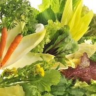 全てのコースでなんと!厳選葉もの野菜が食べ放題に♪