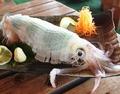 料理メニュー写真福岡県産活イカ 「一本槍の活き造り」 あります♪天然の活イカの旨さを体感してください♪
