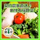 【産地直送】新鮮有機野菜♪