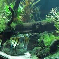 熱帯魚で癒しの空間