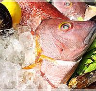 ねこや商店から直送される新鮮な魚介