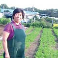 ■陽子ファーム■陽子ファームは25年以上、無農薬・無化学肥料栽培で野菜を作り続けている農場です。土は平地林の落ち葉と米ぬかを混ぜて作った堆肥をベースに土の微生物やミミズの力を借りて作り上げた、極めて自然に近いものです。この無化学肥料の土壌は、野菜本来の味を忠実に作り上げてくれます。