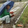 ■かねいち農園■主にミニトマトと栽培。大豆、麦、トウモロコシなど穀物をまるごと発酵した肥料と、食物性のみの完熟堆肥で土作りをする。 (セイショー式農法) 農園特製トマトジュースと林檎ジュースも販売しております。