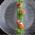 料理メニュー写真田村産の鱒のコンフィ ワサビのムース
