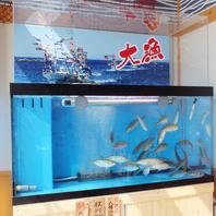 店内の生簀で泳ぐ活魚を新鮮なまま調理!