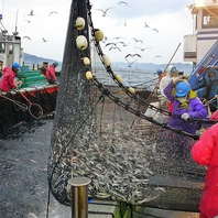 千葉鴨川漁港で朝水揚げされた魚もズラリ!