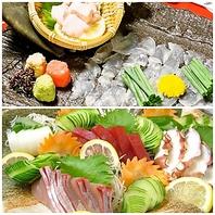 新鮮な鮮魚を見た目も華やかにご提供!