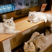 ANIMAL cafe and Bar mofuttoの雰囲気2