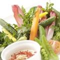 料理メニュー写真新鮮野菜のバーニャカウダー