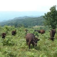 兵庫県内3カ所の契約牧場の「特選神戸牛」