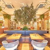 SOLSO FARMとコラボした美しい店内植栽が癒しの空間を演出しております!