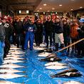 当店でご提供する鮮魚は、毎朝目利きが厳選した旬鮮魚ばかり!その日水揚げされた鮮魚の旨みは格別です。新鮮でなければ味わえない魚本来の旨みや甘みを豊富なドリンクとご一緒にお愉しみ下さい。日によって『高級魚 のど黒』の入荷も!
