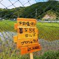 わらや田んぼプロジェクト!専用田んぼは、藁家88スタッフが田植えをし、精米したお米を提供しております♪