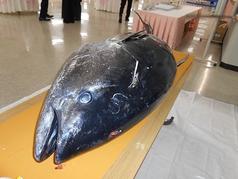 海鮮ダイニング 美喜仁館 高崎店のコース写真